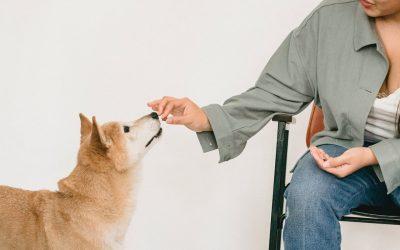 How Can CBD Treats Help Your Pet?